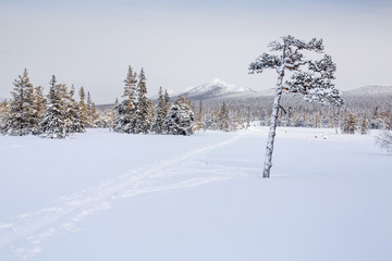 Winter mountain landscape with cross country skiing way. Ural Mountains, Russian Federation
