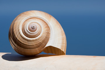 Large Sea Shell Swirl on a white wall in the background of the sea