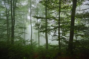 Buchenwald, Nebel