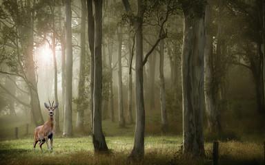 Fototapeten Wald Deep forest