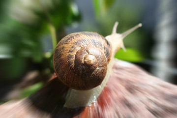 Snail Stock Photo High Quality