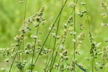 meadow flowers field