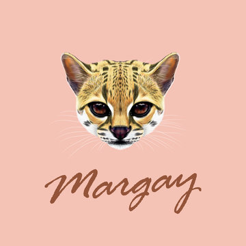 Vector Illustrated Portrait of Margay cat.