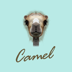 Vector Illustrated Portrait of Camel.