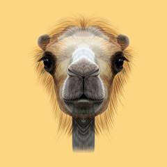 Illustrated Portrait of Camel.