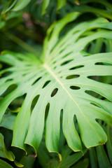 Lush green leaf