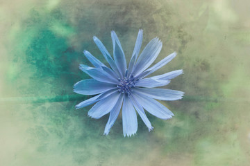 Single blue flower, overhead view
