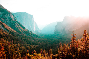 Forest and misty mountains bathed in sunlight
