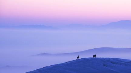 Deer in Winter at Sunrise Overlooking Misty Landscape