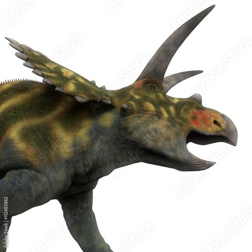 写真の検索: coahuilaceratops