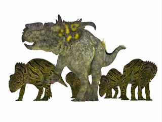 Pachyrhinosaurus Dinosaur with Young - Pachyrhinosaurus was a ceratopsian herbivorous dinosaur that lived in the Cretaceous Period of Alberta, Canada.