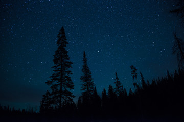 Starry night in pine forest