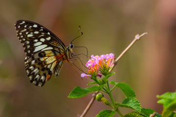 Butterfly with flower in nature for background use