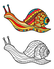 Colorful snail and snail in black and white for coloring book. Pattern in doodle style. Vector illustration