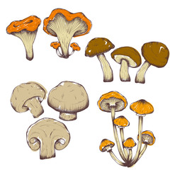 vector hand drawn illustrations of mushrooms set
