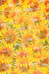 Sunflower abstract colored background concept