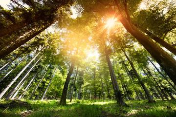 Fototapeten Wald Magnifique forêt concept ressources naturelles