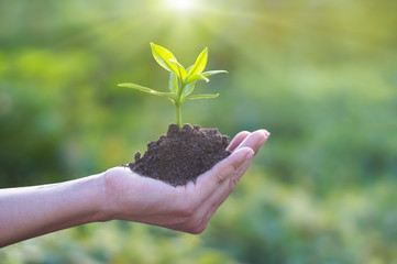 Human hand holding young plant with soil on nature background, environment concept Wall mural