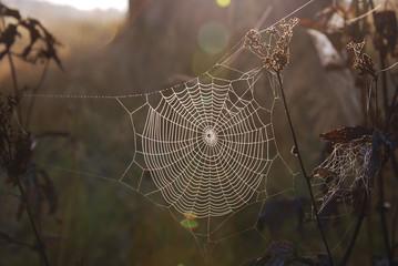round web on field plants illuminated in morning sun