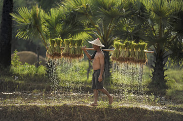 farmer on green fields holding rice baby