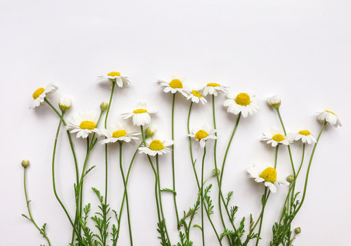 Pattern with chamomile flowers on white background