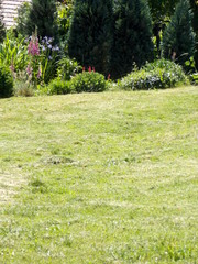 garden photo vertical
