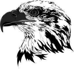 Fototapete - Black eagle