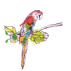 Vector hand drawn watercolor illustration of tropical ara parrot. Colorful parrot bird sitting on branch with green leaves. Isolated design element for fashion print, label, package, background.