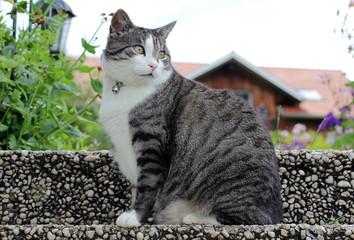 Eine Katze mit Halsband und Glocke