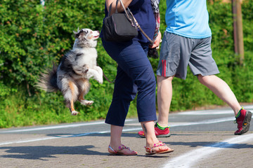 dog jumping behind a woman