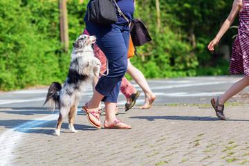 dog jumping behind a woman