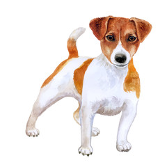 Watercolor closeup portrait of cute Jack russel terrier breed puppy isolated on white background. Shorthair small-sized small terrier dog. Hand drawn sweet home pet. Greeting card design. Clip art
