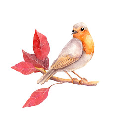 Bird with red leaves branch - autumn. Watercolor