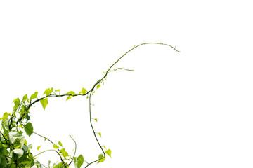 Vine Branch, Vine leaves on white background Wall mural