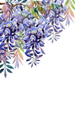 Wisteria flower. Watercolor wisteria card.
