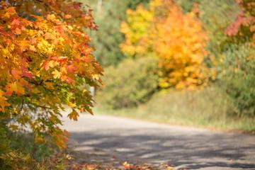 road autumn, maple