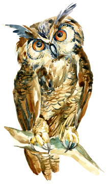 watercolor owl on a branch isolated on white background
