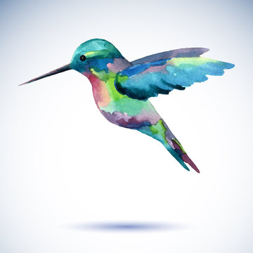 Hummingbird watercolor painting bird on the white background.