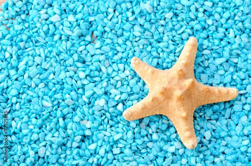 Stella Marina Sfondo Azzurro Stock Photo And Royalty Free Images