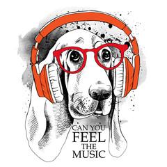 The image dog Basset Hound portrait in the headphones. Vector illustration.