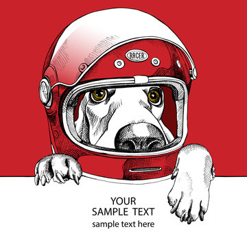 The image of the dog Basset Hound in the modern racer helmet. Vector illustration.
