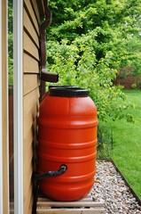 Rain barrels collecting water in the garden