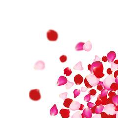 Rose petals falling background. For presentations, invitation ad print. Wedding valentine love concept