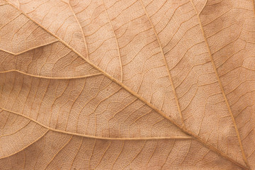 Dry leaves textured