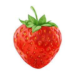 Hand-drawn illustration of Strawberry. Digitally colored.