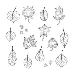 Collection of doodle flowers and leaves