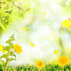 Summer background with beautiful meadow flowers