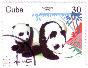 CUBA - CIRCA 1979: A stamp printed in Cuba shows Pandas, series