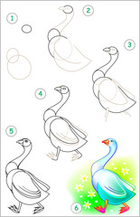 Page shows how to learn step by step to draw a goose. Developing children skills for drawing and coloring. Vector image.