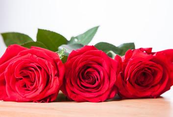 Beautiful three roses